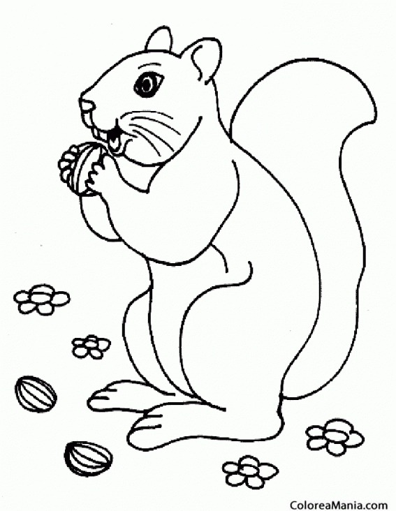 Colorear Ardilla comiendo avellanas (Animales del Bosque), dibujo ...