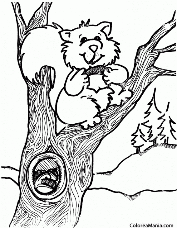 Colorear Ardilla su árbol (Animales del Bosque), dibujo para ...