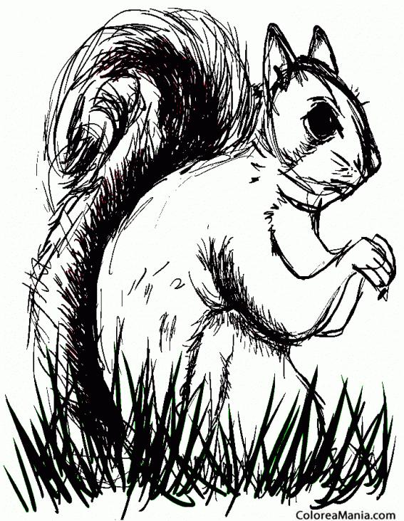 Colorear Ardilla Entre Sombras Animales Del Bosque Dibujo Para Colorear Gratis