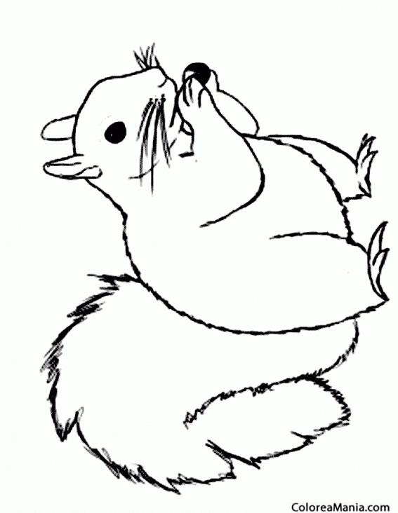 Colorear Ardilla preparándose para el invierno (Animales del Bosque ...