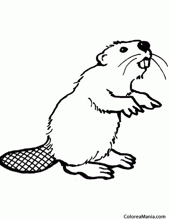 Colorear Castor. Beaver. Biber (Animales del Bosque), dibujo para ...