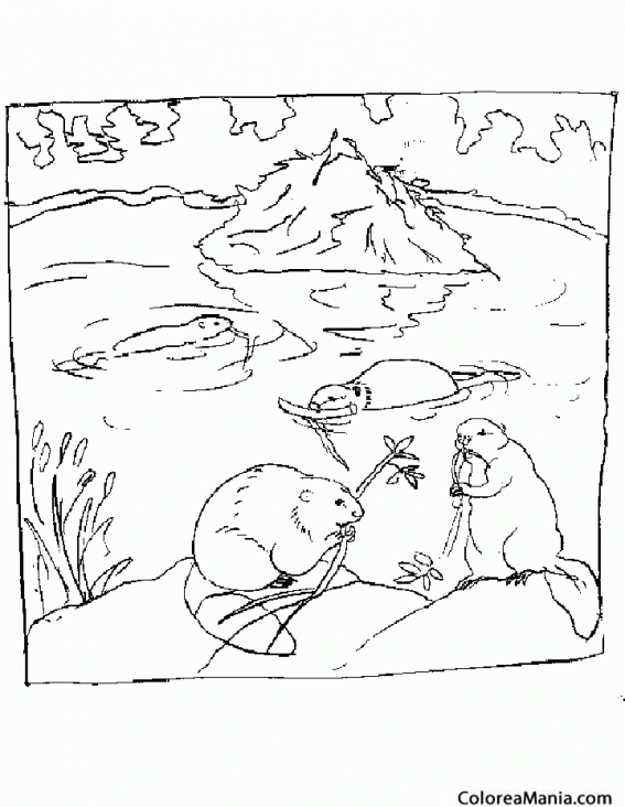 Colorear Castores En El Rio Animales Del Bosque Dibujo Para