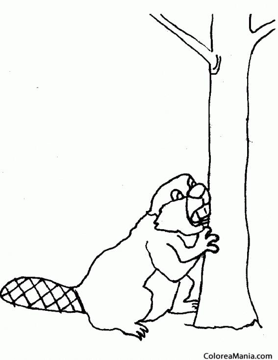 Colorear Castor Royendo Tronco árbol Animales Del Bosque