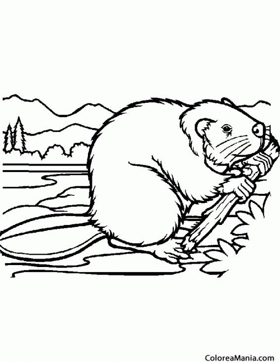 Colorear Castor Haciendo presa (Animales del Bosque), dibujo para ...