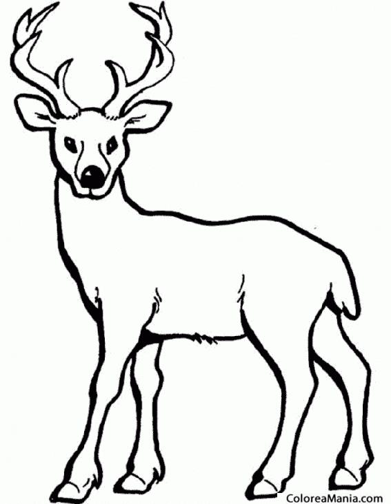 Colorear Alce. ciervo. Deer. Cèrvol 2 (Animales del Bosque), dibujo ...