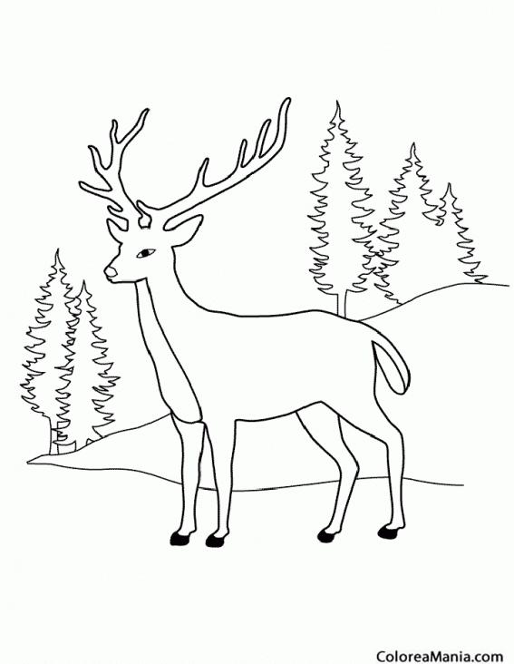Colorear Ciervo En La Montaña 2 Animales Del Bosque