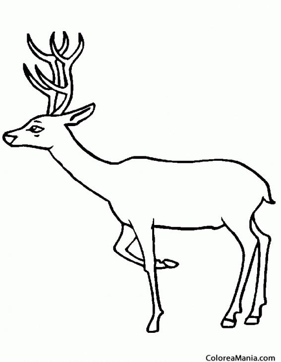 venados dibujos para colorear colorear alce ciervo venado animales del bosque dibujo para
