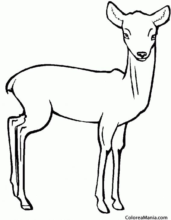 Pin Dibujo Ciervo Para Colorear Bosque Imprimir Ajilbabcom