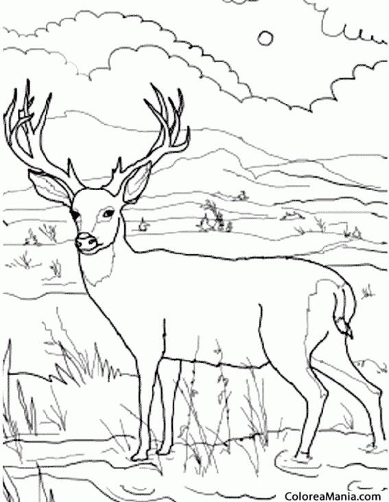 Colorear Ciervo en el río (Animales del Bosque), dibujo para ...