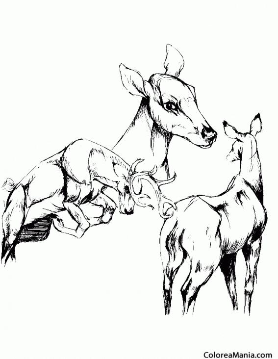 Colorear Familia de Ciervos (Animales del Bosque), dibujo para ...