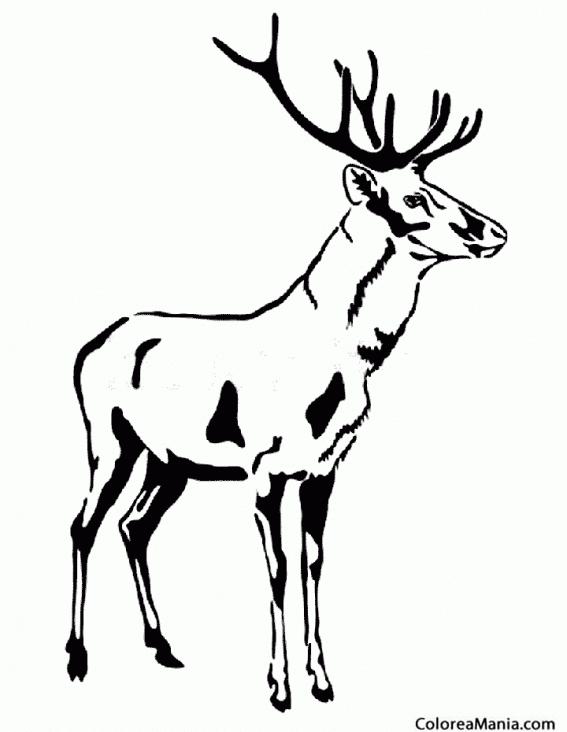 Colorear Ciervo en blanco y negro (Animales del Bosque), dibujo para ...