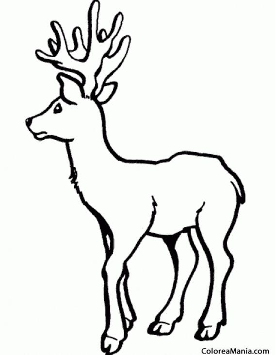 Colorear Reno joven (Animales del Bosque), dibujo para colorear gratis