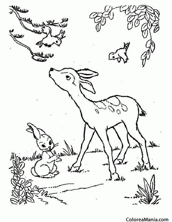 Colorear Cervatillo moteado y pajaritos Animales del Bosque