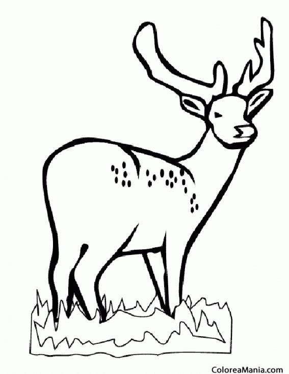 Colorear Ciervo Tamín o ciervo de Eld (Animales del Bosque), dibujo ...