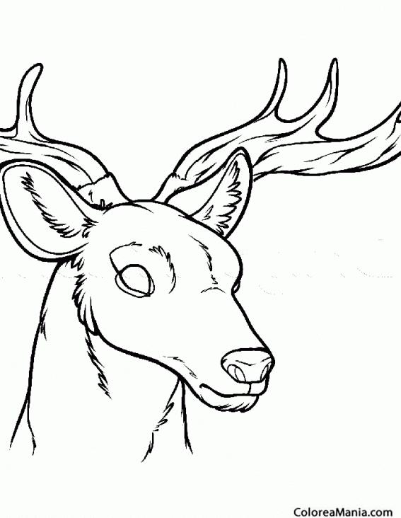 Colorear cabeza de ciervo animales del bosque dibujo for Cabeza de ciervo