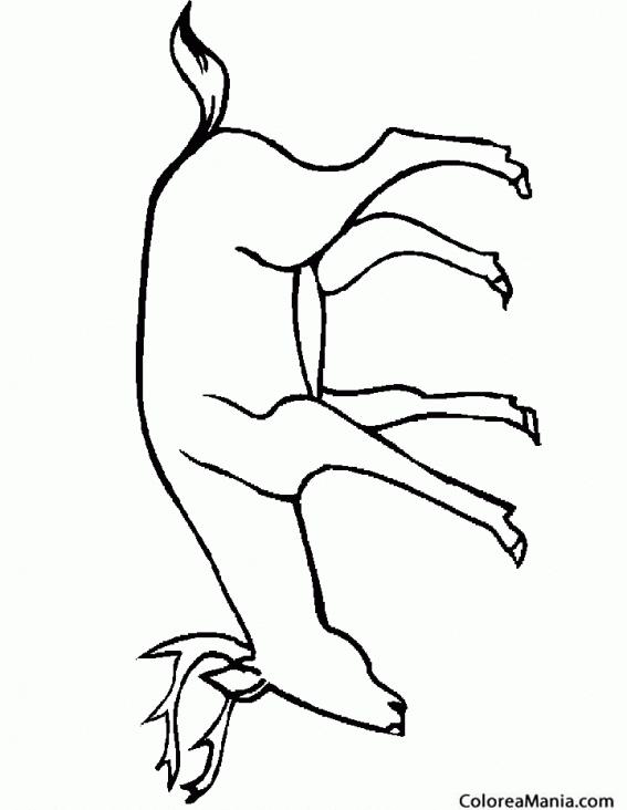 Hermosa Ciervos Para Colorear Páginas Para Imprimir Ilustración ...