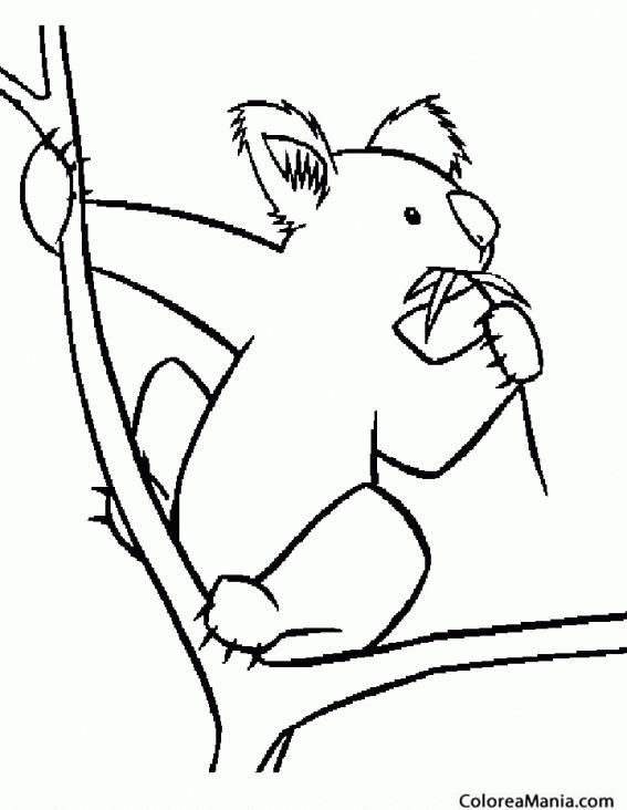 Colorear Koala comiendo sentado en una rama (Animales del Bosque ...