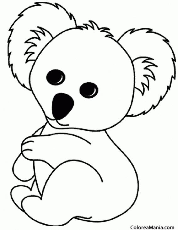 Colorear Koala De Peluche Animales Del Bosque Dibujo Para