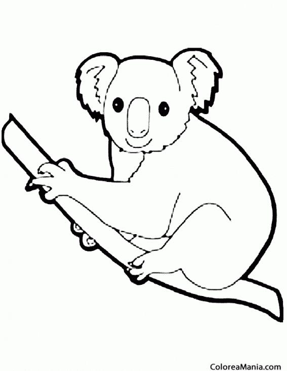 Colorear Koala Silueta Animales Del Bosque Dibujo Para