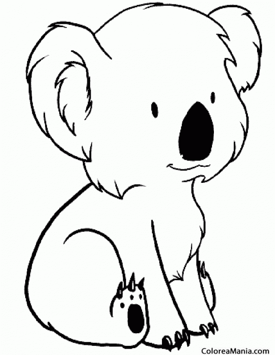 Colorear Koala Kid Coala Petit Animales Del Bosque