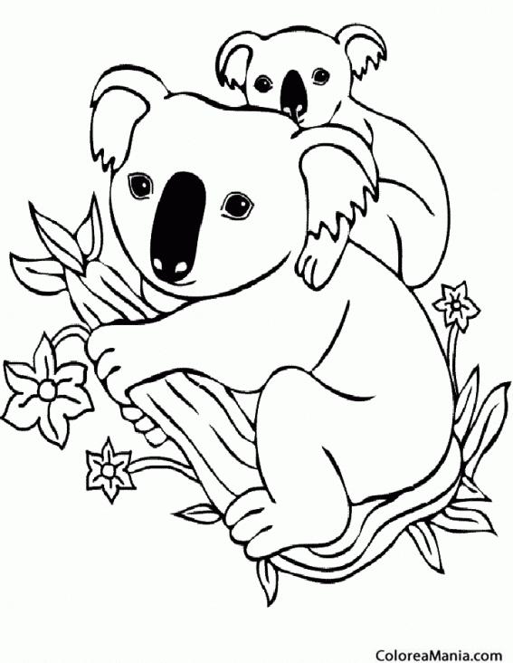 Imagenes Para Colorear De Koala - Get Yasabe