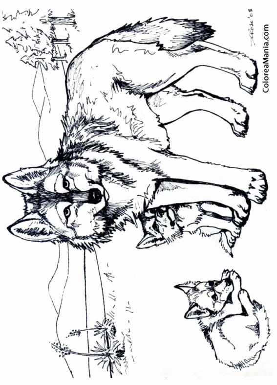 Colorear Loba Con Dos Crías Animales Del Bosque Dibujo