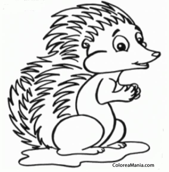 Colorear Erizo Hedgehog Eriçó 2 Animales Del Bosque