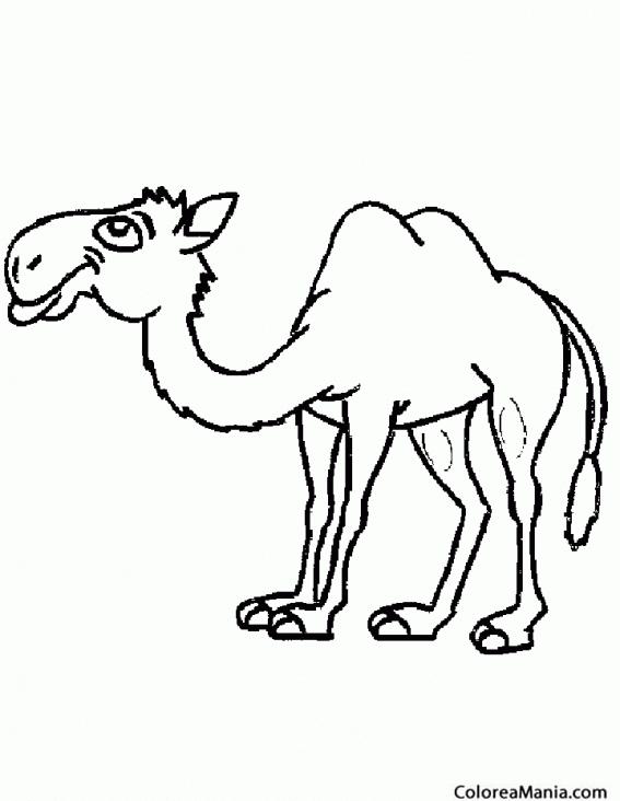 Colorear Camello de desierto (Animales del Desierto), dibujo para ...