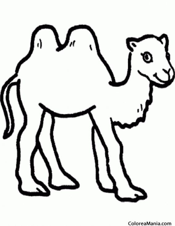 Colorear Camello Camel Silueta Animales del Desierto dibujo