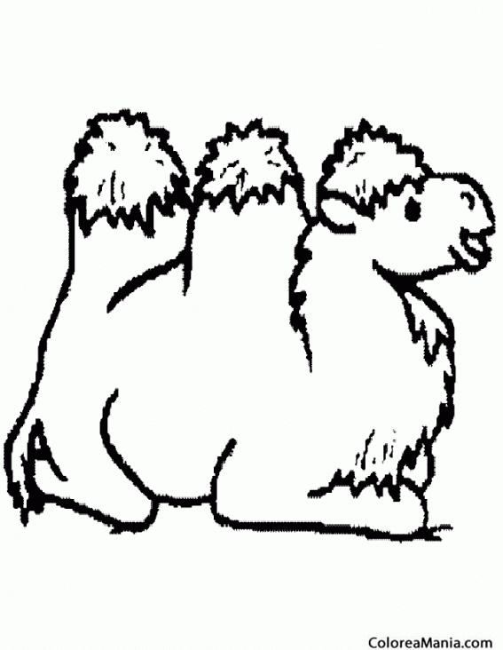 Como Dibujar Un Camello - Unifeed.club