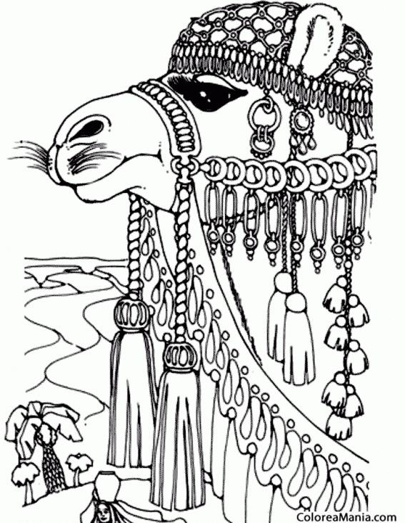 Colorear Cabeza de Camello 2 (Animales del Desierto), dibujo para ...