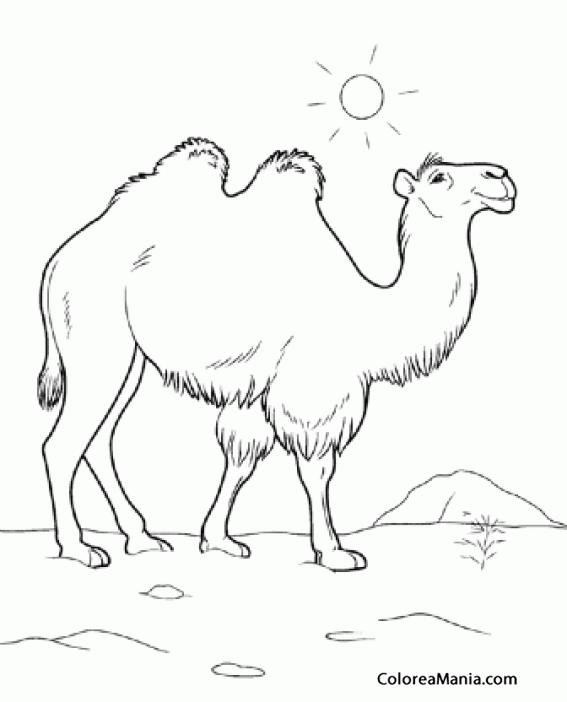 Colorear Camello bajo el sol (Animales del Desierto), dibujo para ...