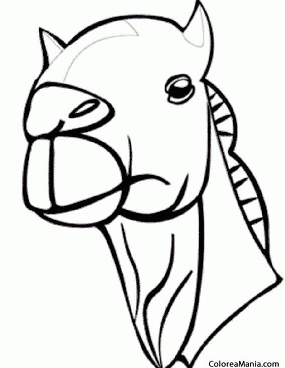 Colorear cabeza de Dromedario (Animales del Desierto), dibujo para ...