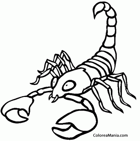 Colorear Escorpin Scorpion Scorpio Scorpione 15 Smbolos