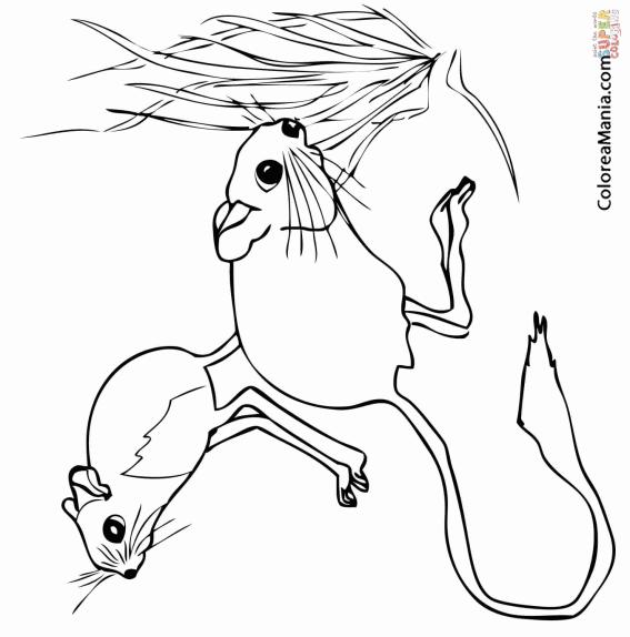 Colorear Dos Jerbos (Animales del Desierto), dibujo para colorear gratis
