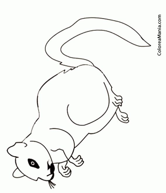 Colorear Silueta Jerbo anteojos (Animales del Desierto), dibujo para ...