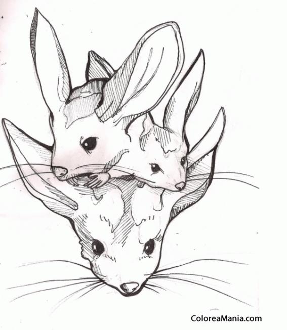 Colorear Tres Jerbos apiñados (Animales del Desierto), dibujo para ...