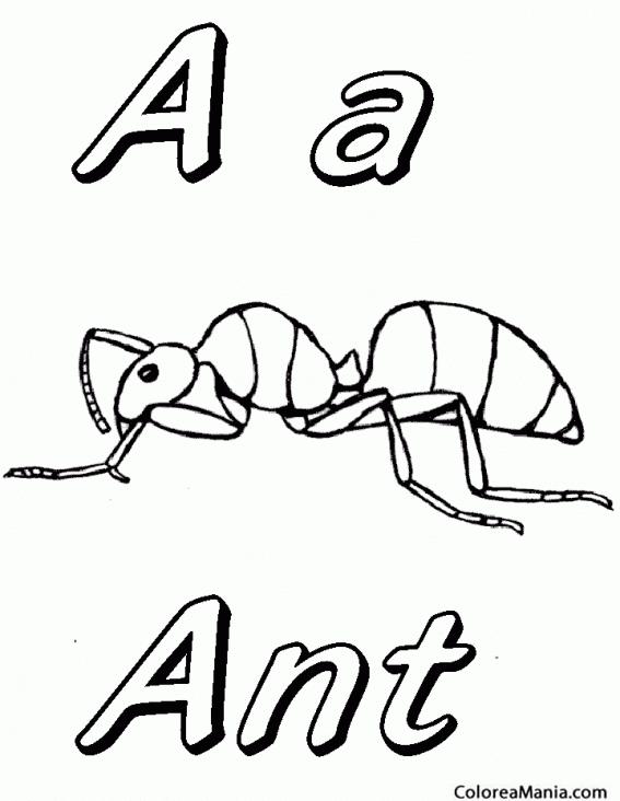 Colorear A For Ant Hormiga En Inglés Insectos Dibujo Para