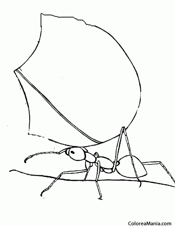 Colorear Hormiga tansportando hoja (Insectos), dibujo para colorear ...