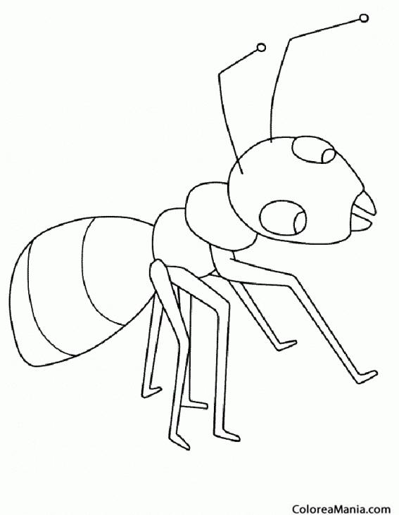 Colorear hormiga blanca insectos dibujo para colorear gratis - Fotos de insectos para imprimir ...