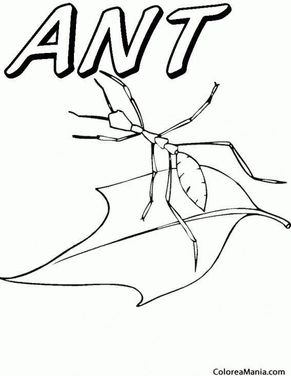 Colorear Hormiga sobre una hoja (Insectos), dibujo para colorear gratis