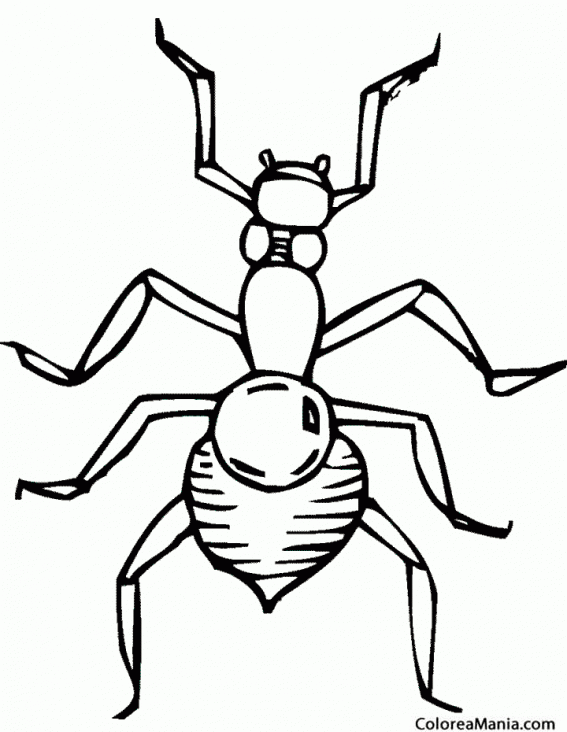 Colorear Hormiga Vista Aérea Insectos Dibujo Para