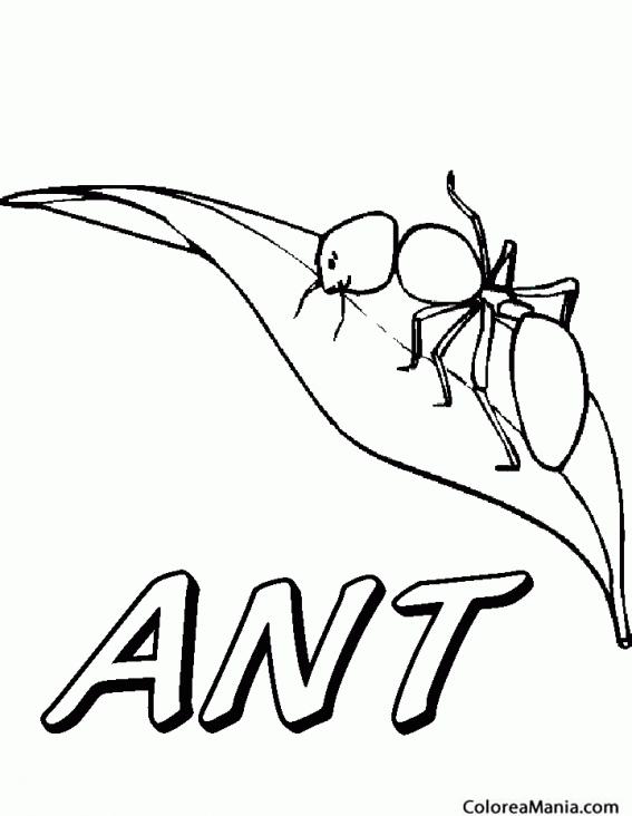 Colorear Hormiga sobre la hoja (Insectos), dibujo para colorear gratis