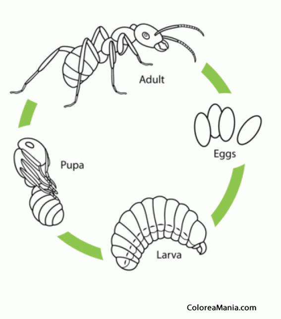 sistema respiratorio de la rana