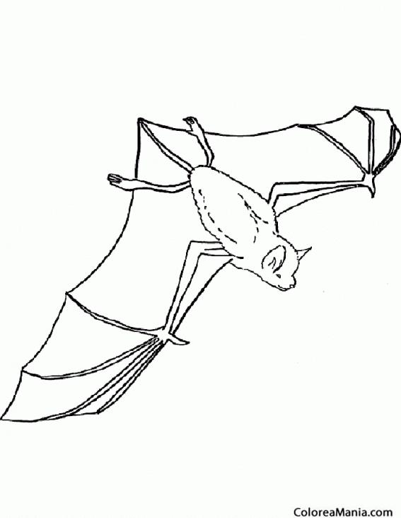 Colorear Murciélago Vista Aérea Animales Del Bosque
