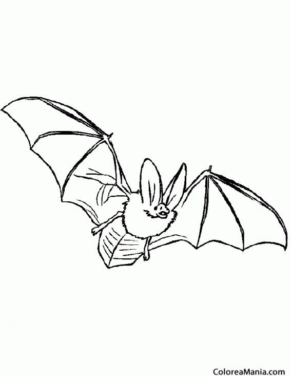 Colorear Murciélago De Orejas Atentas Animales Del Bosque Dibujo