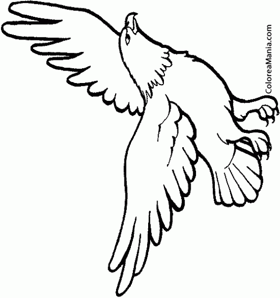 Colorear águila Alzando El Vuelo Aves Dibujo Para