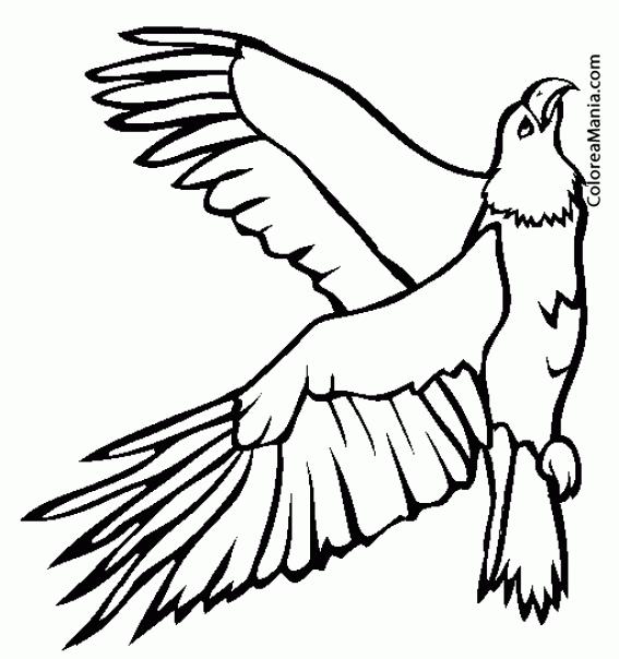 Fantástico águila Para Colorear Friso - Páginas Para Colorear ...