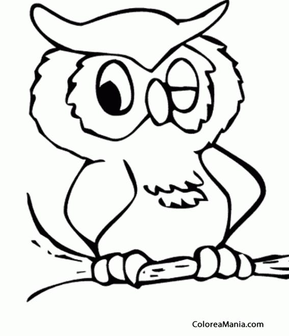 Colorear Bho guiando un ojo Aves dibujo para colorear gratis