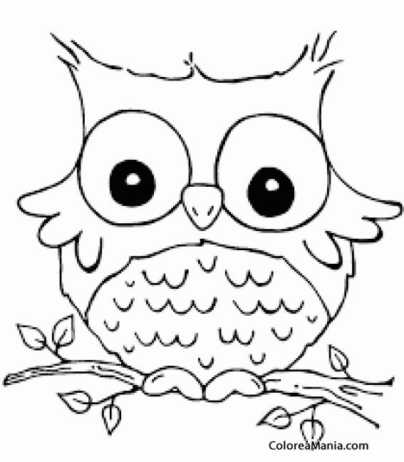 Colorear Bho alas chicas Aves dibujo para colorear gratis